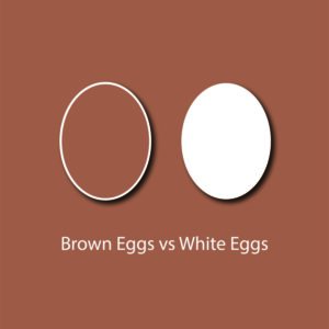 egg myth infographic - brown eggs are better